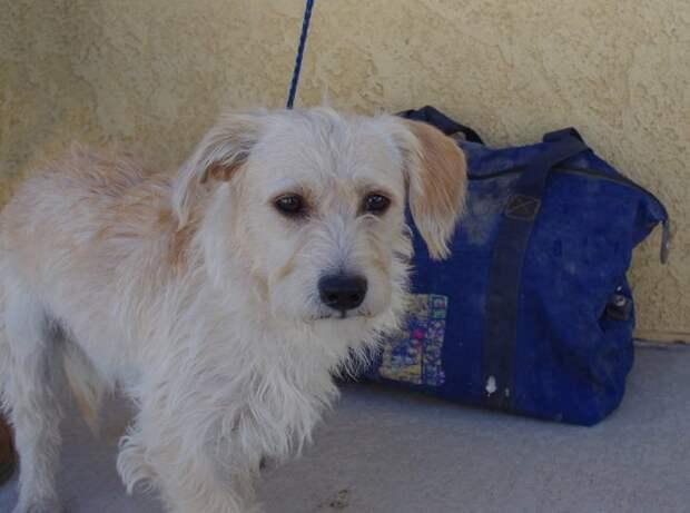 В Калифорнии спасли пса, которого оставили умирать в закрытой сумке