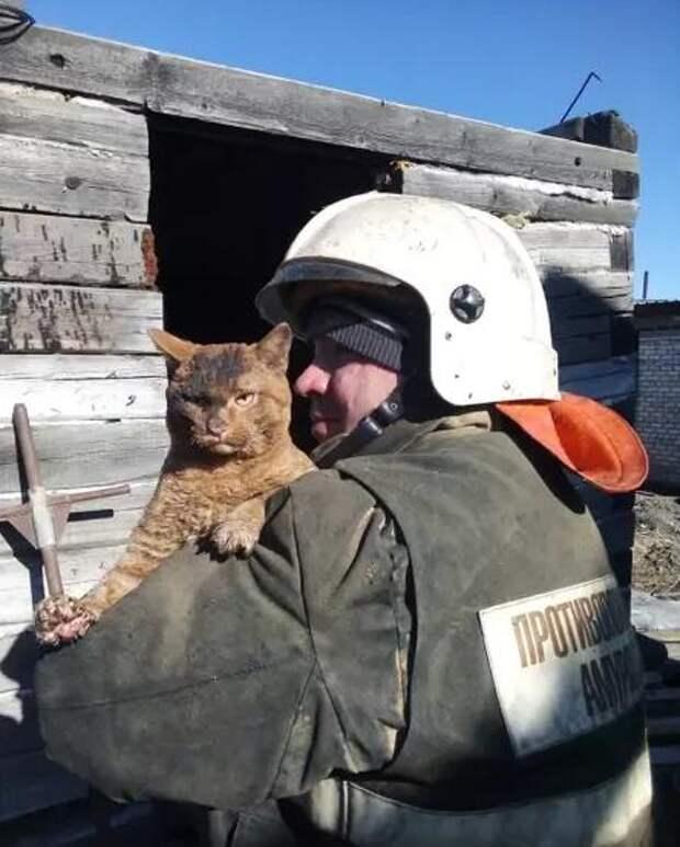 Спасенный из пожара суровый кот восхитил пользователей