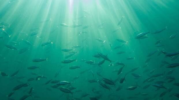 Новое открытие ученых поможет исследовать уровень кислорода ранних океанов