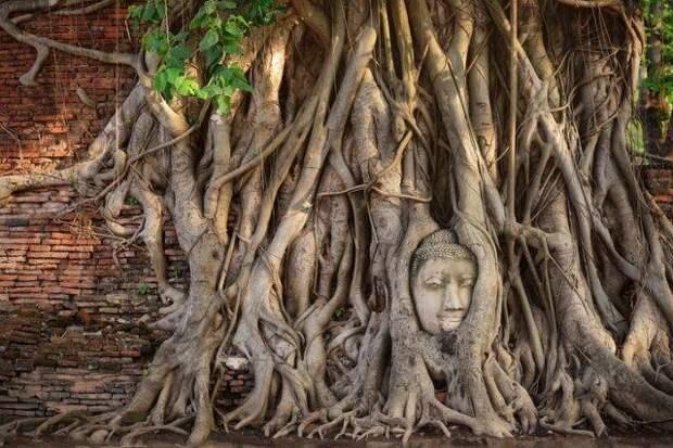 Необычная достопримечательность Таиланда