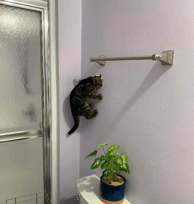 Умора: котейки, которые внезапно сломались