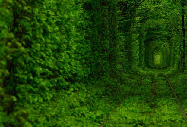 Тоннель любви (Tunnel of Love) Клевань, Ровенская область, Украина