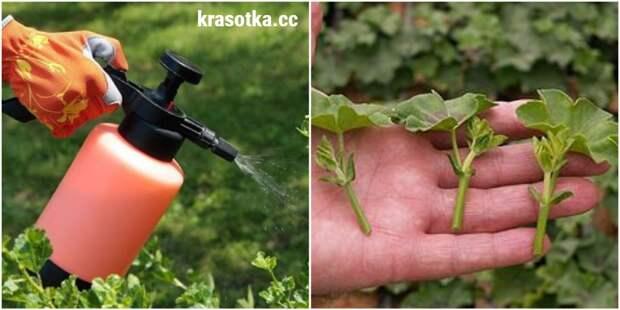 Что нужно сделать каждому садоводу в мае: 10 ключевых действий
