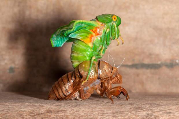 США атаковали миллиарды вылезших из земли цикад