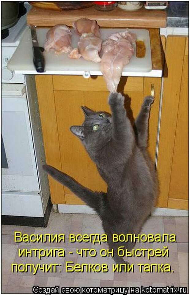 Котоматрица: Василия всегда волновала интрига - что он быстрей  получит: Белков или тапка.