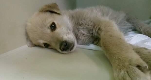 Щеночек лежал на улице под трубой 3 дня. Жизнь крошке спасла бездомная собака