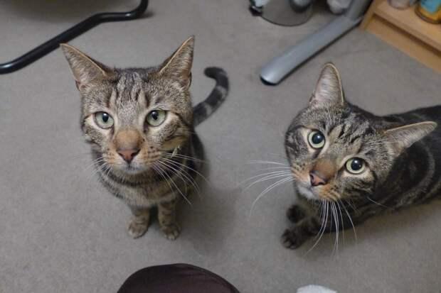 Братья Коты часто исчезали из дома… Тайна открылась, когда в ошейнике нашли записку!