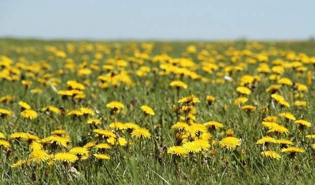 Оренбургским дачникам, на чьих участках растёт ромашка и одуванчик, выпишут штрафы