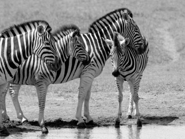 В мире животных от фотографа KAHI