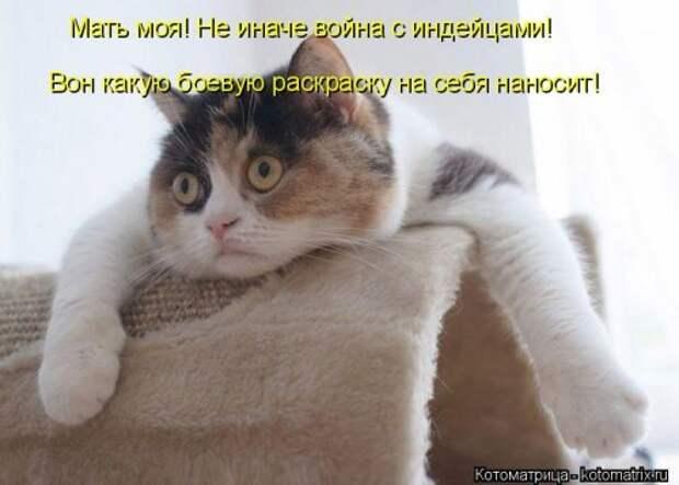4208855_1556890753_kotomatricy24 (500x358, 32Kb)
