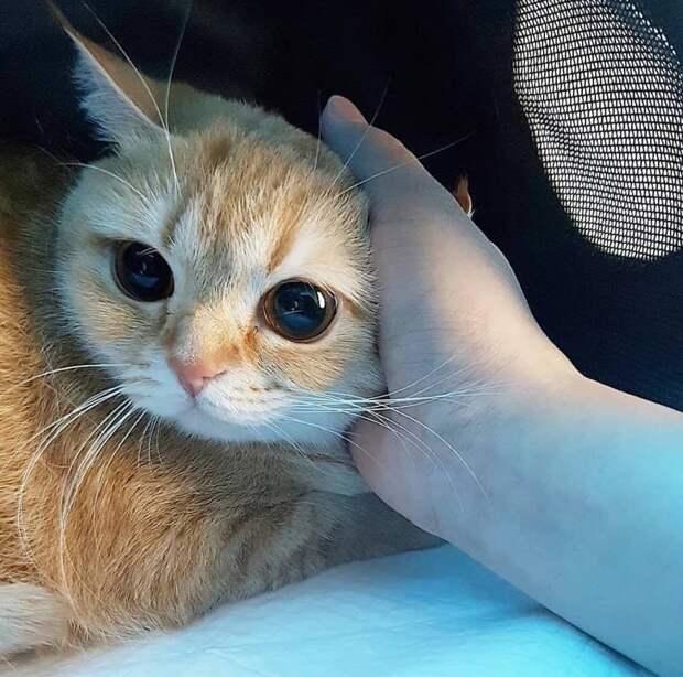 19 фото о трогательной любви между животным и человеком