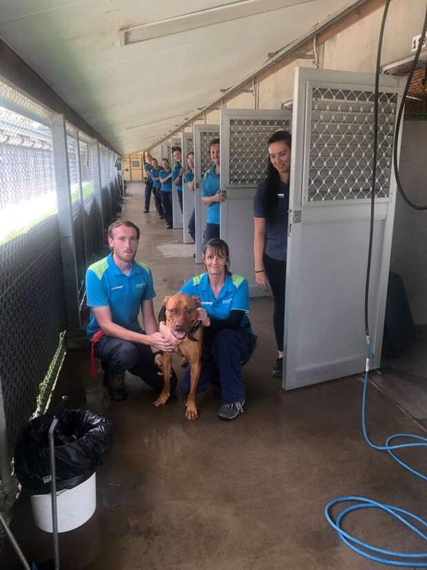 Все приютские собаки уехали в новые дома, кроме грустного пёсика, который никому не понравился
