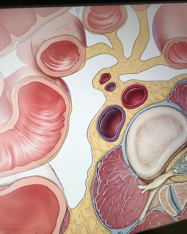 Как диета и факторы окружающей среды влияют на вашу кишечную флору