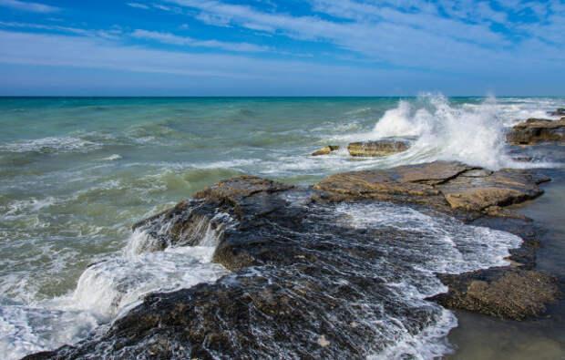 На берегу Каспийского моря появились мертвые нерпы