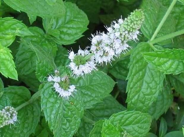 Очень красивые и неприхотливые растения для сада
