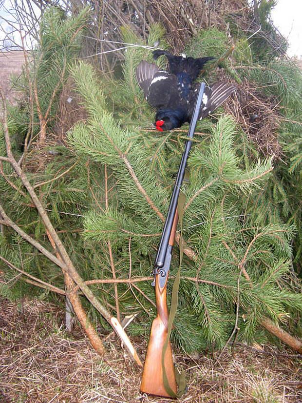 Как правильно стрелять дичь на весенней охоте