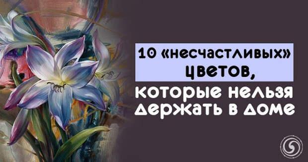 10 «несчастливых» цветов, которые нельзя держать в доме