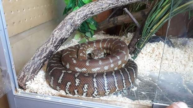 В квартире жителя Краснодара нашли 16 редких змей