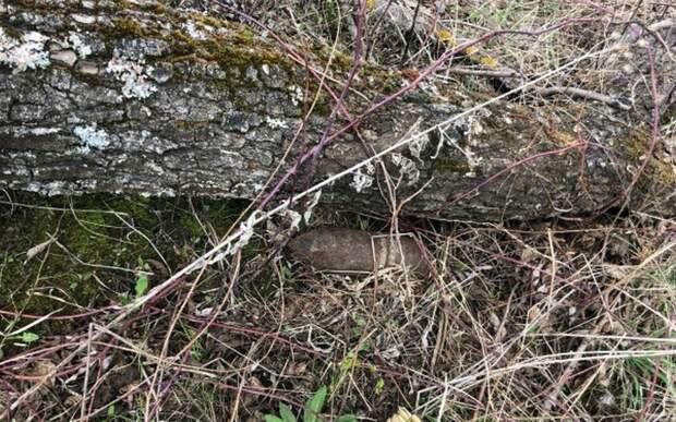 В деревне под Рязанью обнаружили неразоравшийся артиллерийский снаряд