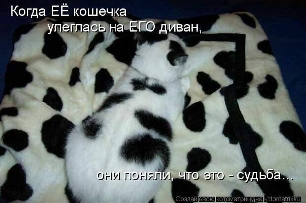 Котоматрица: Когда ЕЁ кошечка улеглась на ЕГО диван, они поняли, что это - судьба...