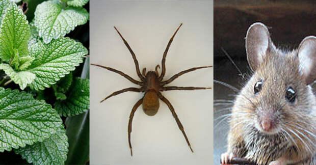 Если у вас в доме есть это растение то можете забыть о мышах и насекомых