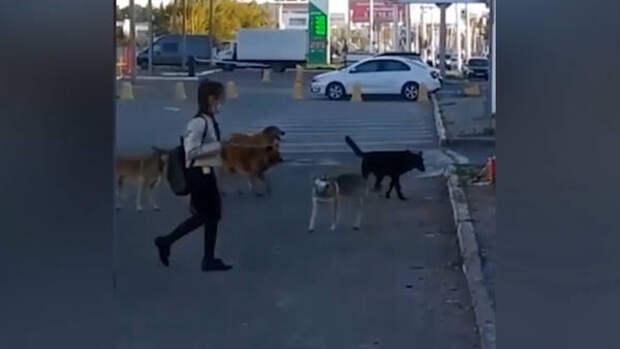 «Ребенка закинула на капот»: в Уфе стая собак держит в страхе целый двор