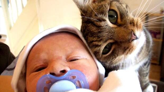 Неадекватную няню разоблачили благодаря кошке