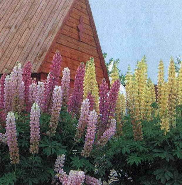 Типы цветников