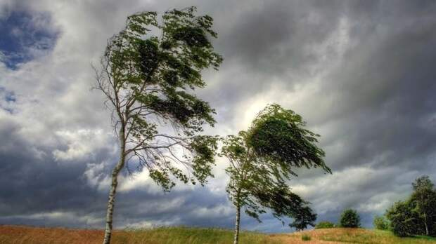 На юге Тюменской области ожидается усиление ветра до 18 м/с