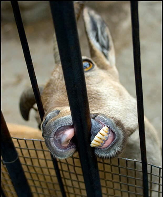 Стадо ослов посадили в индийскую тюрьму за съеденные дорогие растения