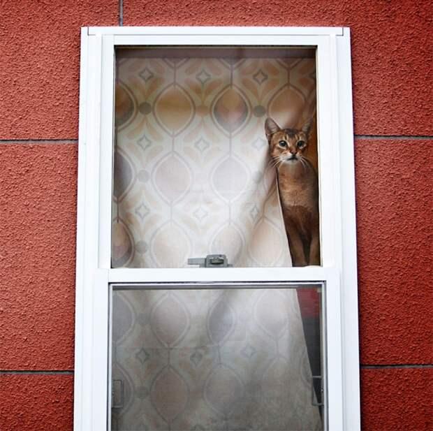 7240160-R3L8T8D-650-cat-waiting-window-5