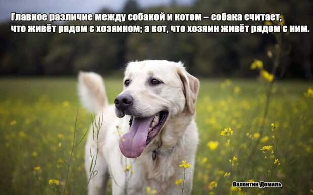8.  афоризмы, животные, собаки