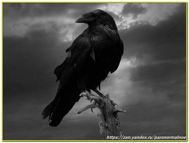 Источник фото: https://ru.best-wallpaper.net/Raven-darkness_iphone_wallpaper.html