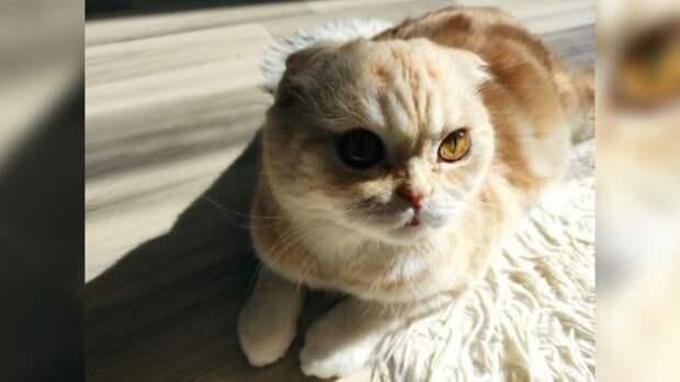 Что нужно спросить себя перед тем, как принести домой кота