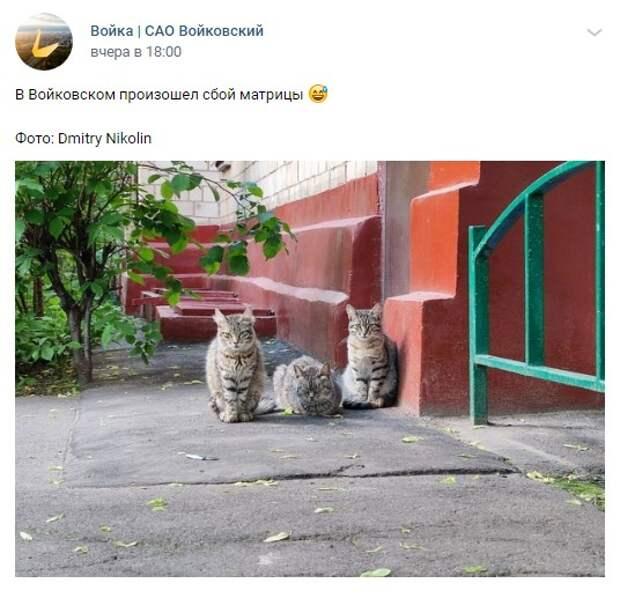 Фото дня: пушистое трио в Войковском