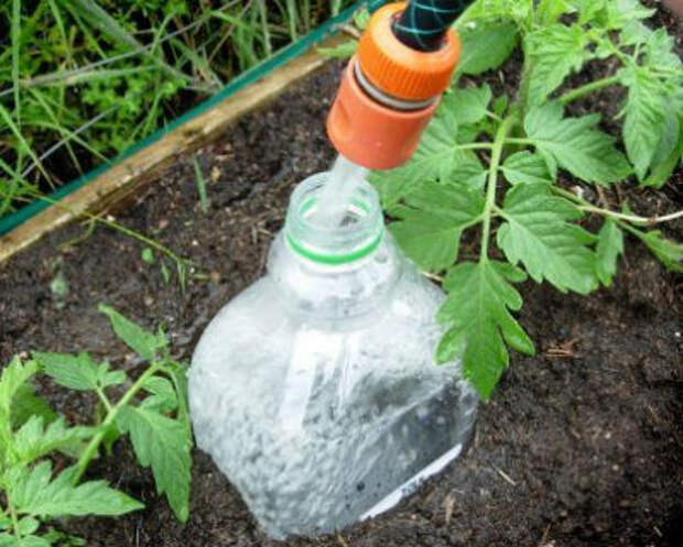 Полив помидор в теплице через пластиковые бутылки своими руками — преимущества и способы