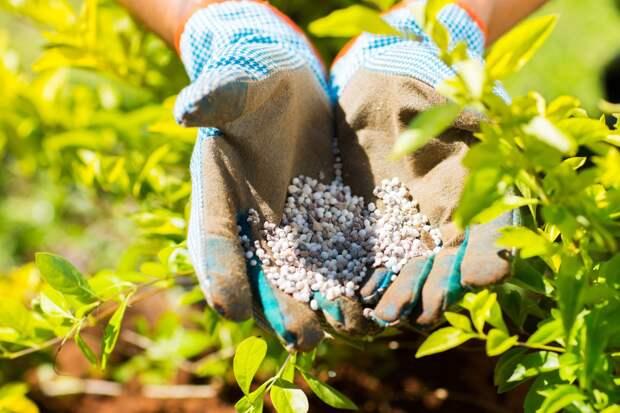 Бесполезности, от которых нет никакого проку в саду и в огороде, зря потраченные деньги