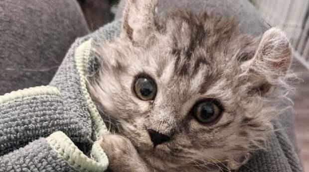 Женщине принесли на передержку бесхвостого котёнка. Спустя неделю появился ещё один — с такой же проблемой