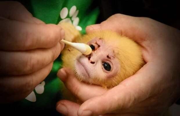 Лангурёнок-сирота очень тосковал… И тогда он сделал мамой ПЛЮШЕВОГО мишку! Трогательно…