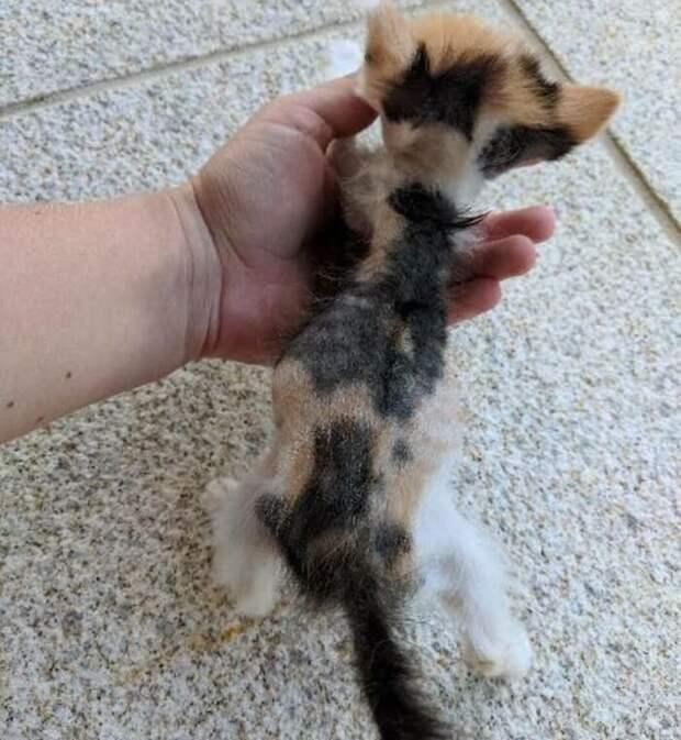 Маленький котёнок, которого хотели усыпить, спасён волонтерами