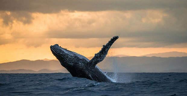 День Рыбака - все для праздника: игры, загадки, конкурсы, смешные гифки. Морские гиганты нашей планеты