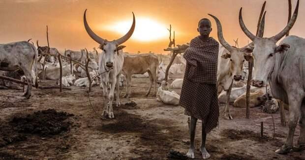 Будни африканского народа динка: женщины, непризнающие одежду, побежденный рак ибуйволы