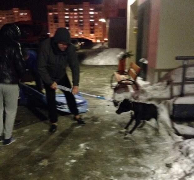 В Челябинске жители микрорайона спасли истощенную бездомную собаку