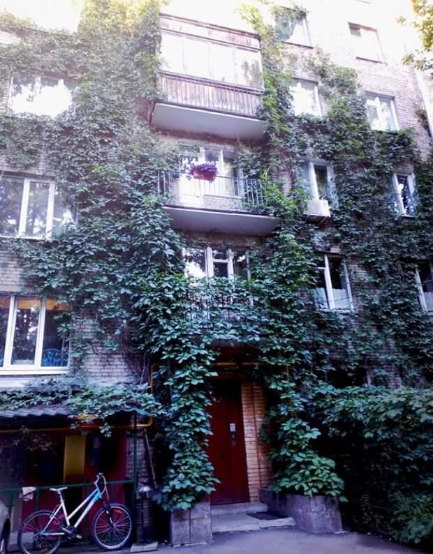 Фото дня: озелененный фасад дома на Ленинградке