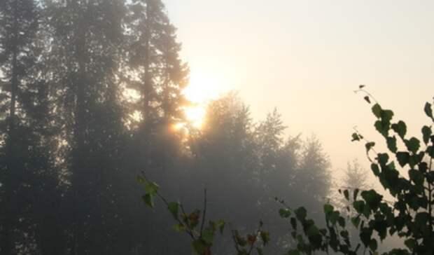 Солнечная итеплая погода ожидает тагильчан вначале недели