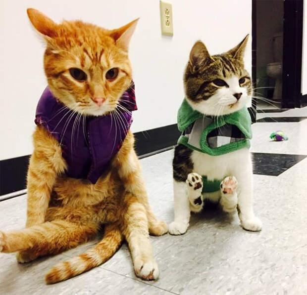 На двоих четыре лапы: парализованный кот находит себе друга