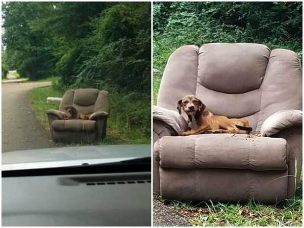 Брошенный на дороге пес до последнего верил, что хозяин вернется грустно, истории спасения, история спасения, собака, собаки, спасение животных
