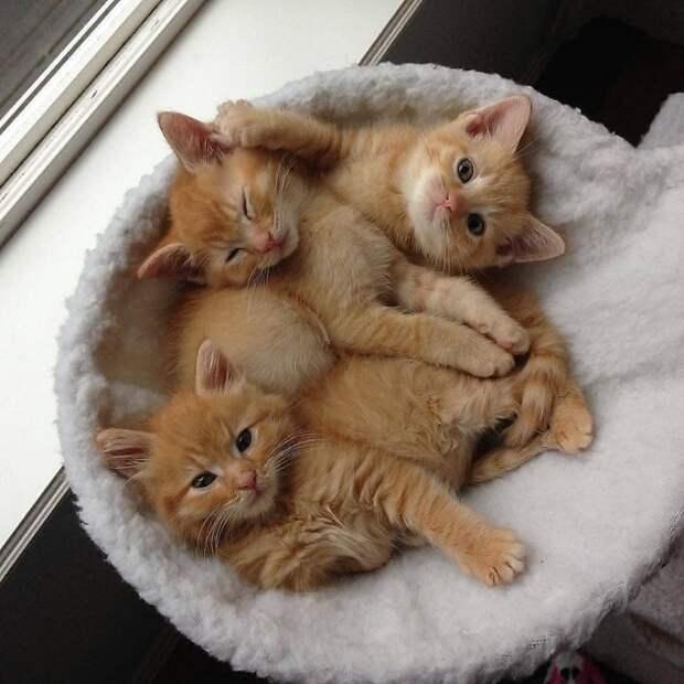 20 фото милейших котят, которые растопят сердце любого