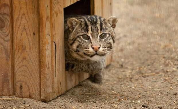 Необычная кошка и мартышка поступили в Новосибирский зоопарк