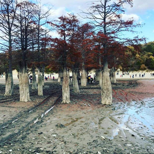 Туристам запретили подходить к Кипарисовому озеру в Анапе